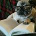 Belle S Bookshelf Book Vs Movie The Neverending Story