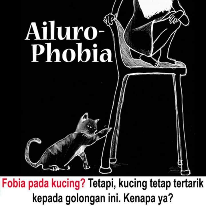 Ailurophobia!