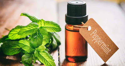 mint oil is good for so many problems