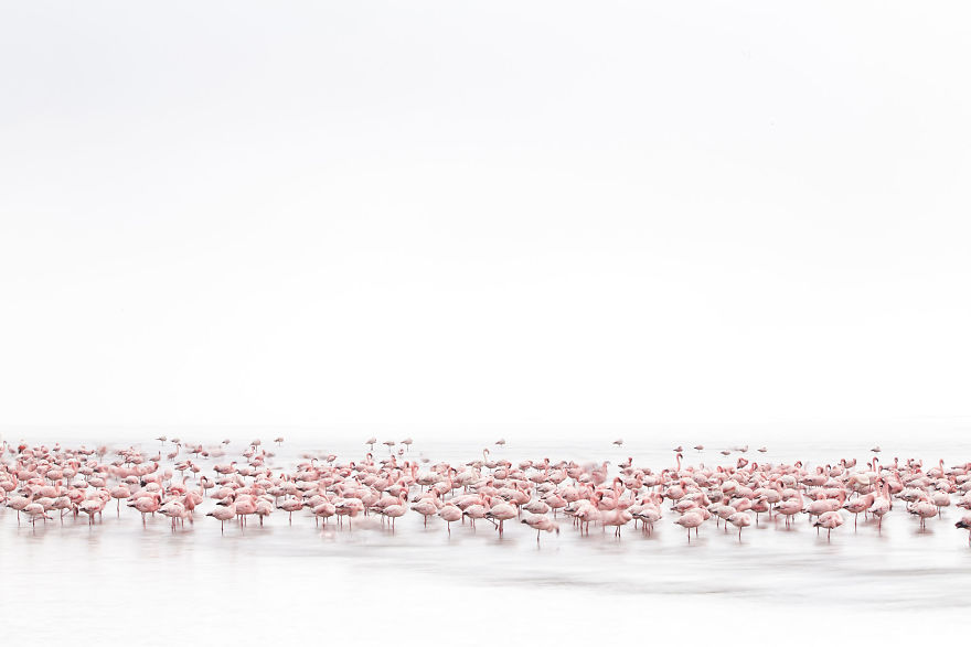 Meniconzi Alessandra, Switzerland (Open Competition, Wildlife)