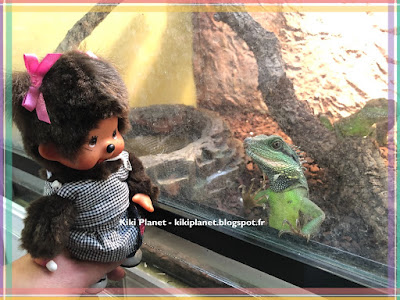 kiki monchhichi reptiles pogona physignatus cameleon lézard