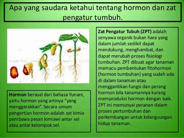 Image result for zat pengatur tumbuh tanaman