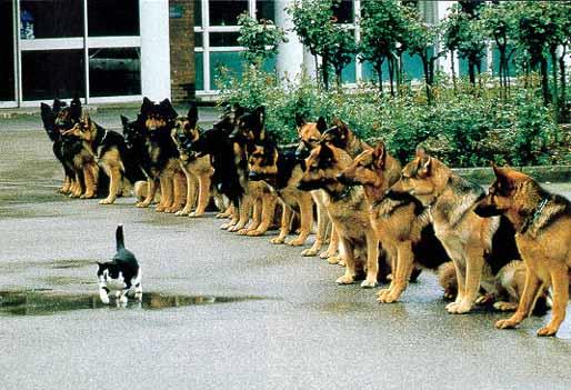 Como arrancan las guerras?-http://4.bp.blogspot.com/-w2uaPUhZWYI/TgIpMKMY9JI/AAAAAAAAArI/AqD9AFQdfO0/s1600/Duhalde+-+Kirchner+-+Democracia+-+gato+con+valor+-+perros+policias+entrenados.jpg
