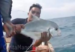 Mancing Double Strike Ikan Cermin Besar