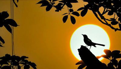 Bird Photography, composite Photography, silhouette photography