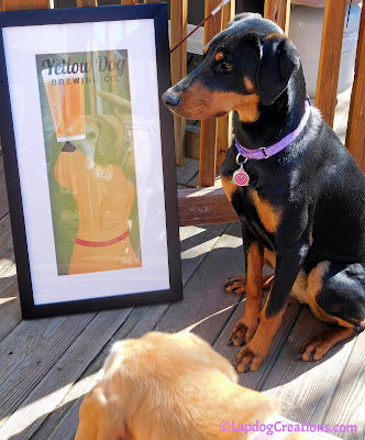 """Hey Look, I can See My Reflection"" - Sophie #YellowDogBrewingCo #FramedDogArt #FramedArt #CraftBeer #RescuedDogs #LapdogCreations ©LapdogCreations"