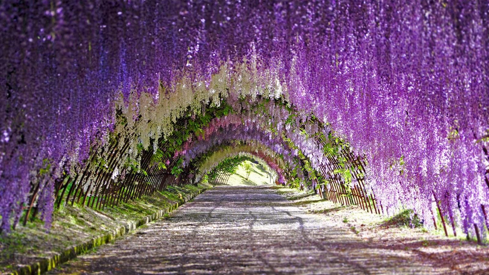 Wisteria blooms at Kawachi Fuji Gardens in Kitakyushu, Japan © Wibowo Rusli/Alamy