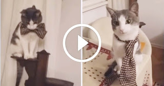 Fashionable Kitty Can't Decide Between Tie or Bow tie