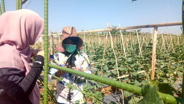 Kampung Pertanian Terpadu HPS 2018 Tunjukkan Hasil Positif