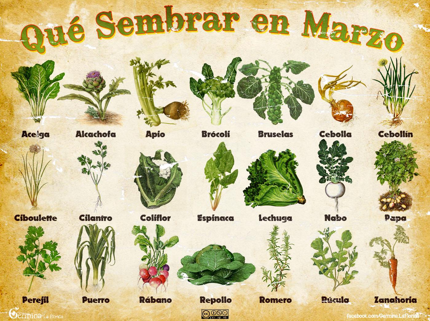 Germina la florida calendario de siembra de marzo for Jardin que planter en janvier