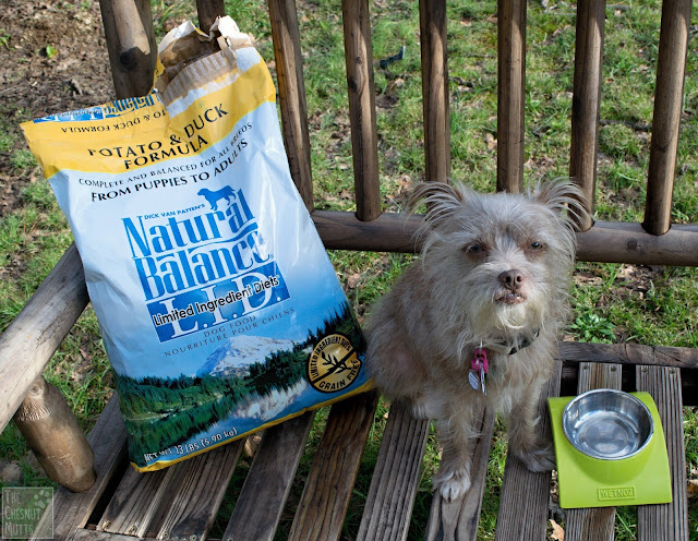 Bailey next to her Natural Balance limited diet natural dry dog food