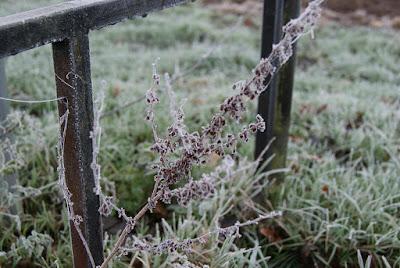 Eine eingefrorene Pflanze vor einem Zaun
