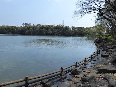 【池の水ぜんぶ抜く】大阪府枚方市・山田池の水・その後の様子(2019年4月)