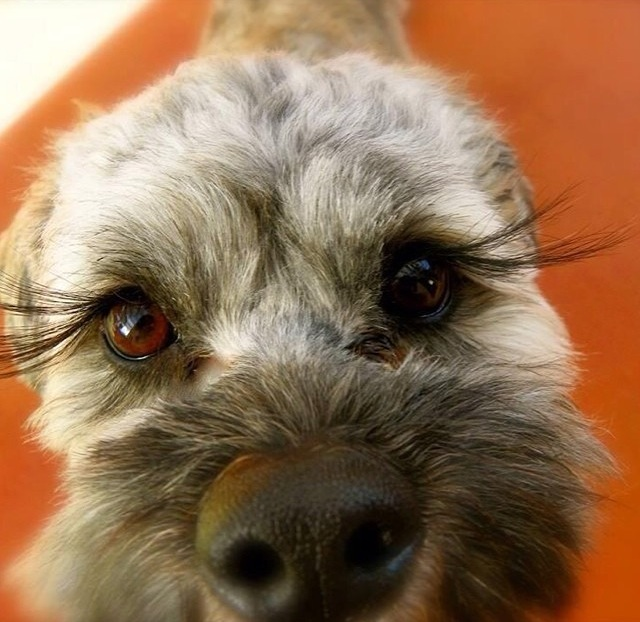 Pawsome Pet Of The Week Mr Twix The Rock N Roll Dog
