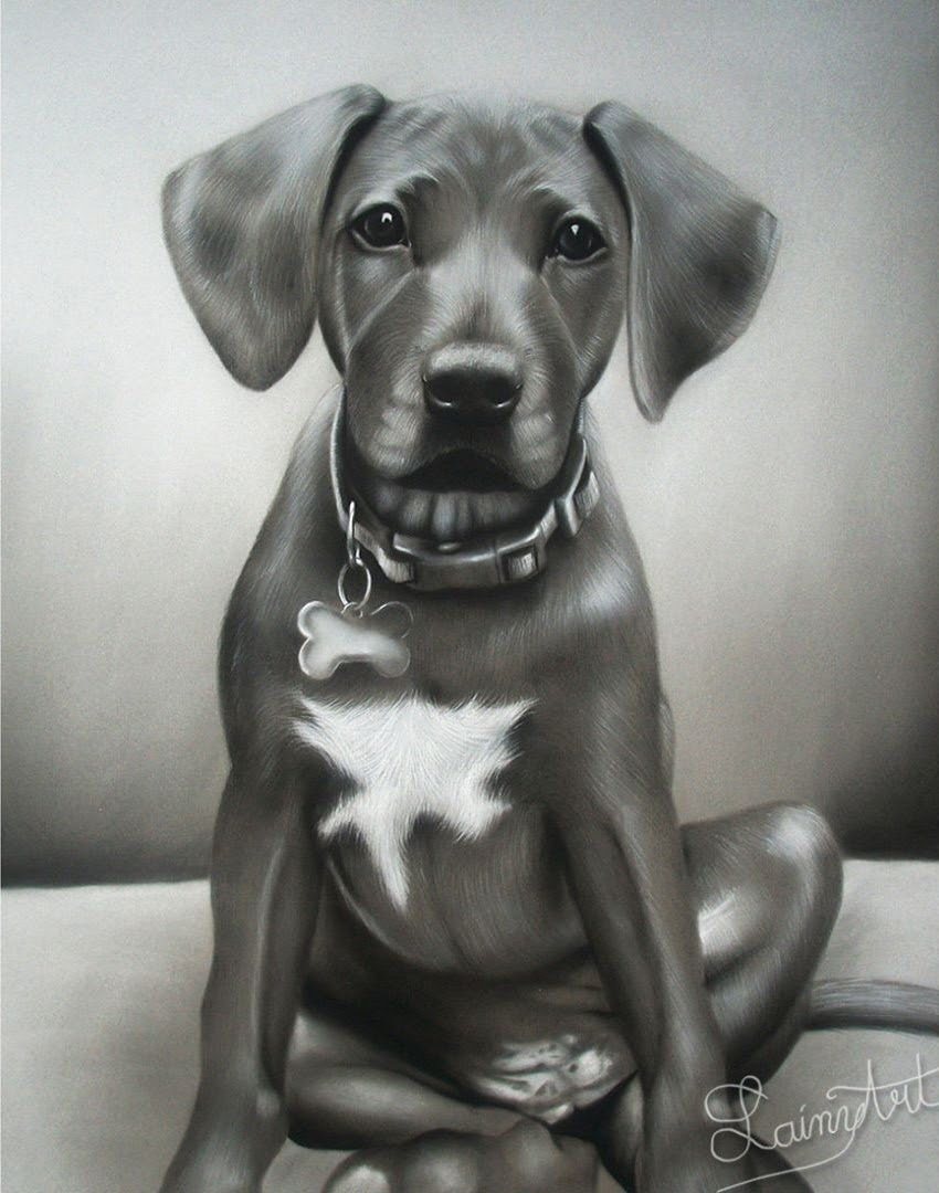 05-Cute-Little-Puppy-Alaina-Ferguson-Animal-Portraits-Cats-Dogs-and-a-Guinea-Pig