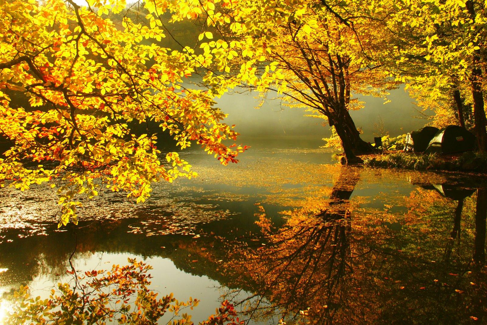 High Definition Fall Wallpaper: Bimages.Net - Free Full HD Desktop Wallpapers