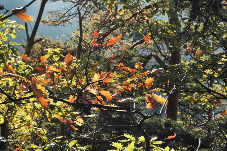Feuilles jaunes et oranges en automne