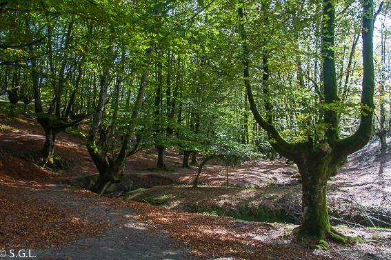 Hayedo de Otzarreta en parque natural de Gorbeia