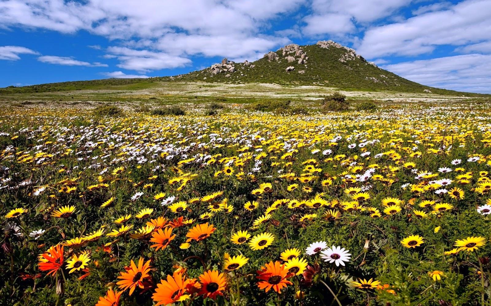BANCO DE IMÁGENES: Paisajes, Flores Y Aves De Nuestra