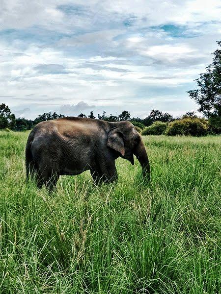 jim corbett national park ,elephant ,travel