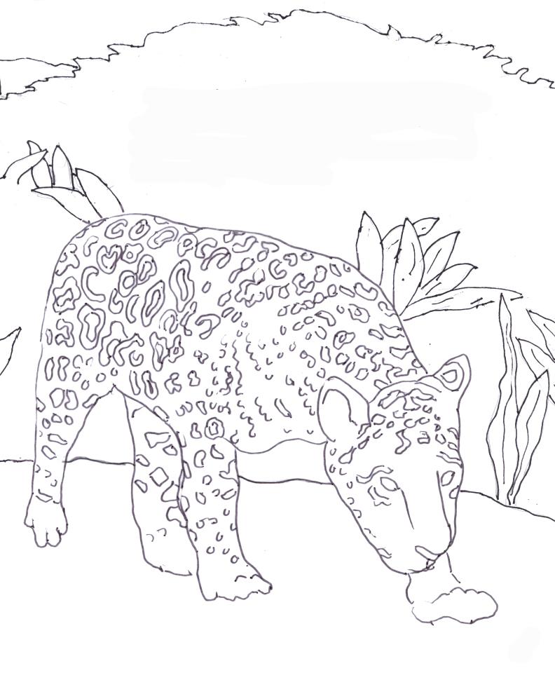 Jaguar Coloring Pages: Caroline Arnold Art And Books: JAGUAR: Coloring Page