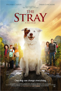 The Stray Poster