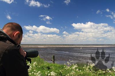 Suede-ile-Oland-reserve-naturelle-eckelsudde