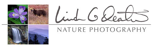 Linda G Deaton Nature Photography Travel Blog