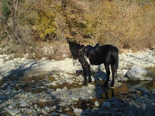Horsexplore, riitta reissaa, Albania, ratsastusmatka