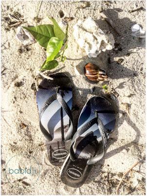 paire de tongs havaianas posée sur le sable de la plage de la preneuse à l'île maurice à côté de coquillages