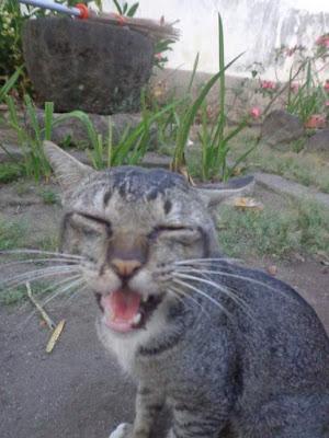 Kumpulan Fakta Menarik Tentang Kucing dan Keistimewaannya
