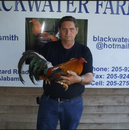 Carol Nesmith: An Excellent Gamefowl Breeder in America | Sabong