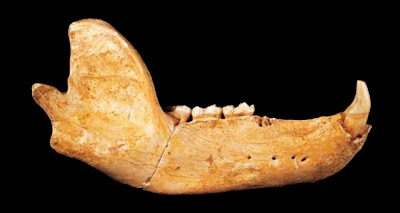 Scientists recover DNA from 300,000 year old bear fossil