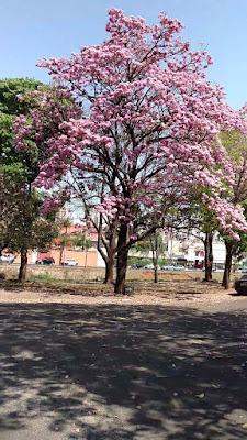 maristelasalgado.blogspot.com