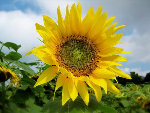 Gambar  Bunga  Tercantik di Dunia beserta  Namanya Kumpulan