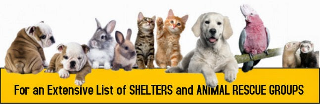 spay, neuter, cats, dogs, kitten, puppy, petsnmore.org,list of low cost to free spay neuter clinics, list of shelters and rescue groups
