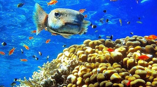 Resultado de imagen para fauna Mar Rojo