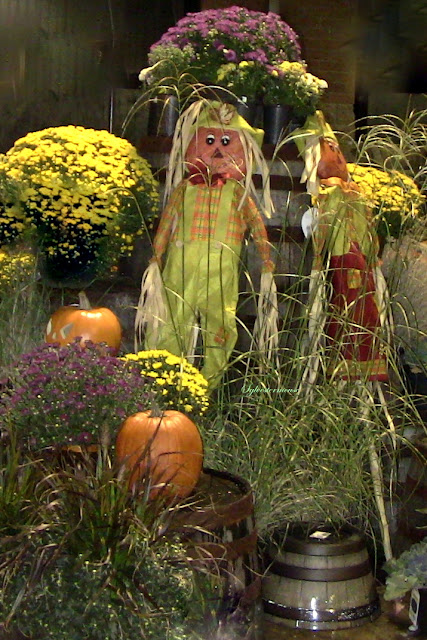 Learn how to create a beautiful fall harvest display in yards or porch, capture the brilliance of flowers and combine it with the great harvest fest.
