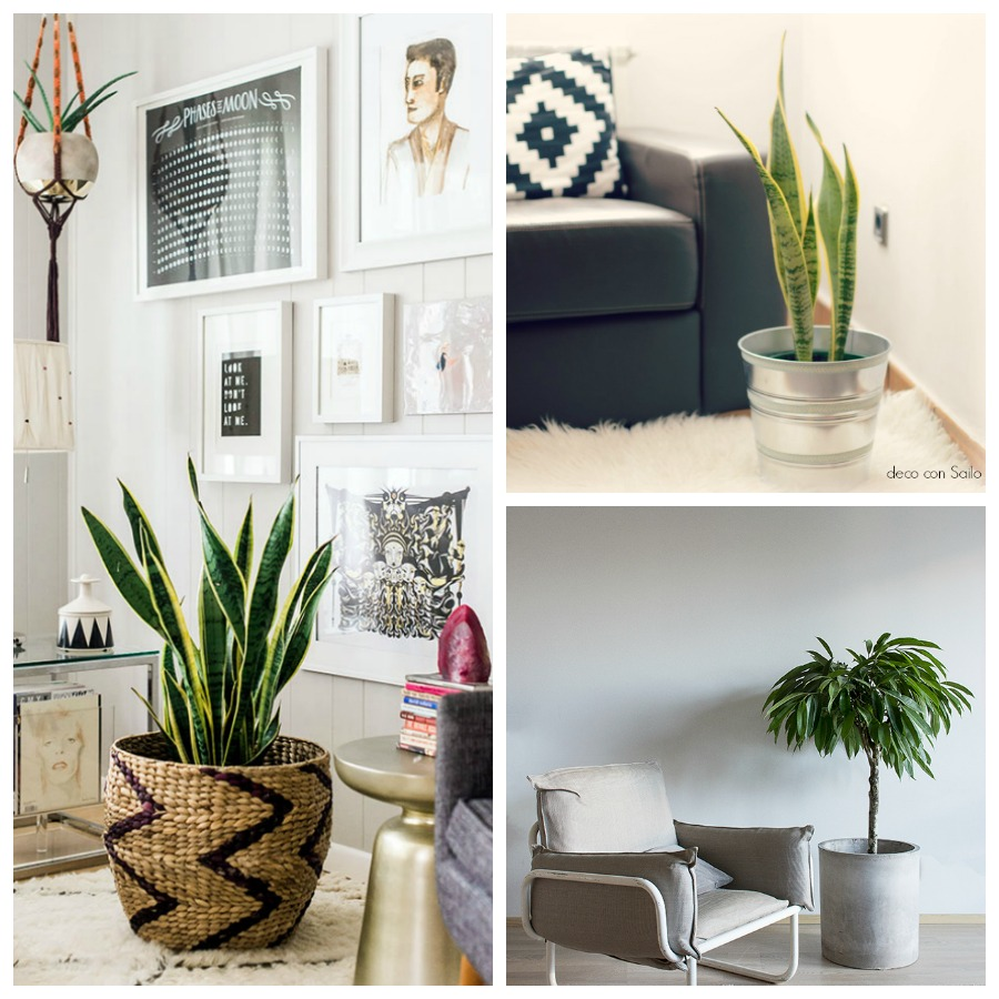14 ideas de decoraci n con plantas tendencias 2016 plantas for Decoracion con plantas en living