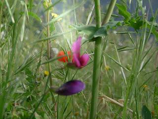 poemas cortos de primavera