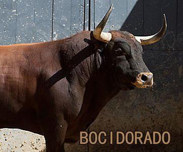 Diferentes razas de toros - Página 3 10407427_723970771053694_1235722726515225227_n