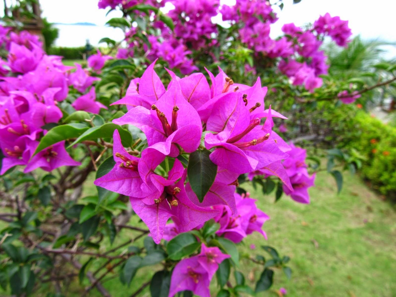 Contoh bunga sempurna pada tanaman bunga | Manfaat di ...