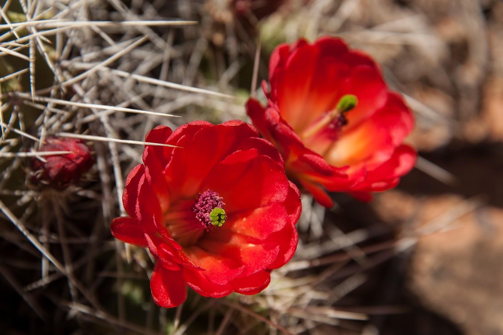 The Booby Hatcher: Cedar Mesa Flowers