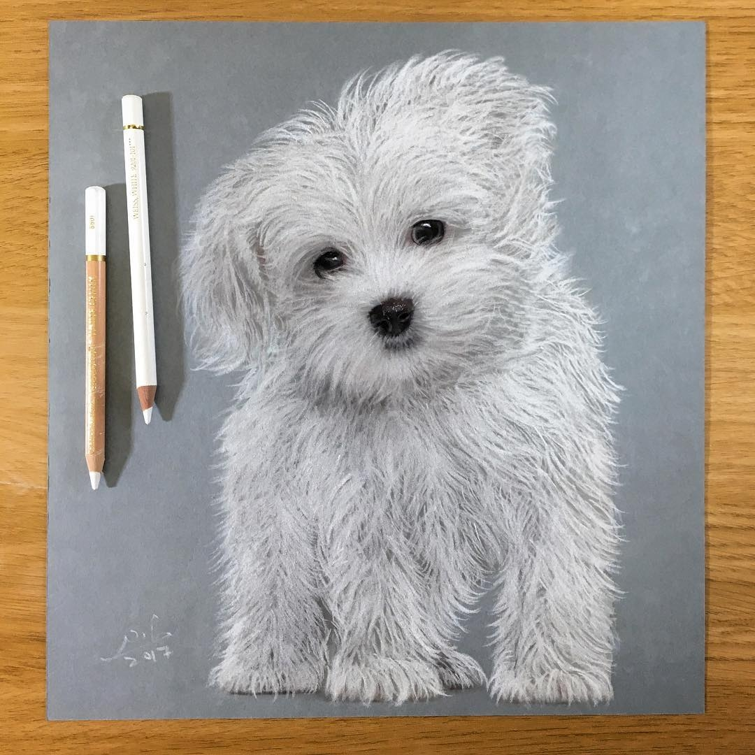 07-Liran-Vardiel-Animal-Drawings-using-Colored-Pencils-www-designstack-co