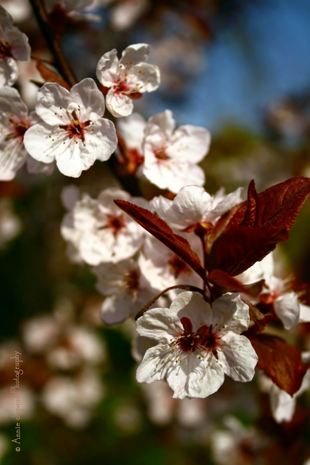 image of lovely spring blossoms
