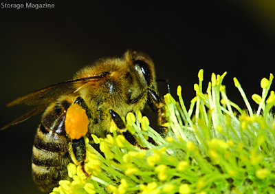 Storage Magazine: The Bees Knees ; UK Agri Food Supply Chain Research and Analysis Organisation Fera and DataCore Software