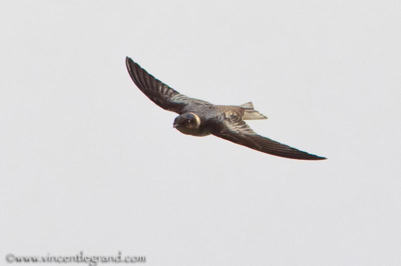 Non-Stop Birding: October 2011