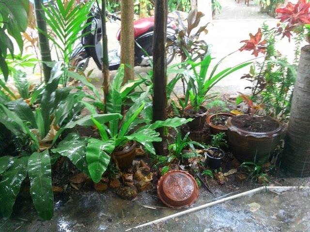 Honda Scoopy стоит под дождем