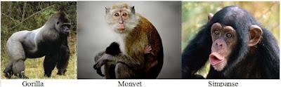 gorila, monyet dan simpase hidup dihutan basa, Ekosistem Darat Dan 6 Bioma