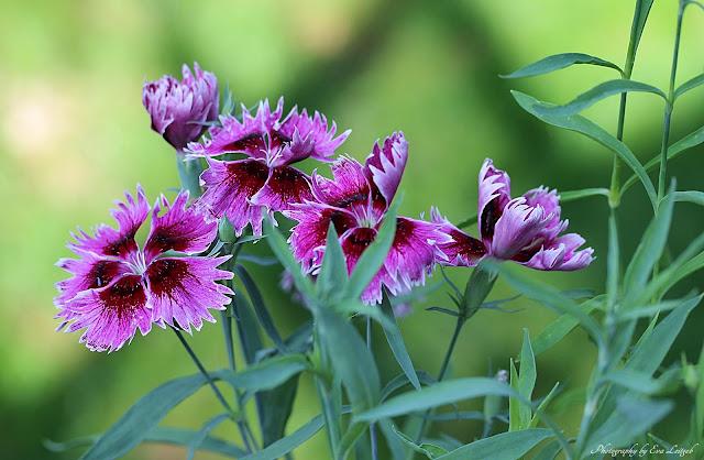 EVAS WELT September  Blumen im Garten